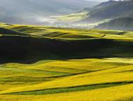 Study in Qinghai