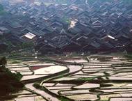 Study in Guizhou